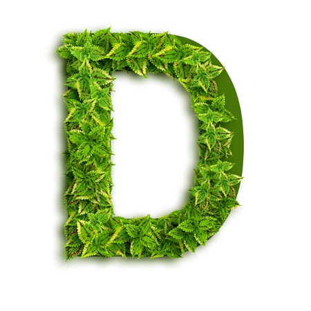 Letter D, alphabet of green leaves isolated on white background. photo