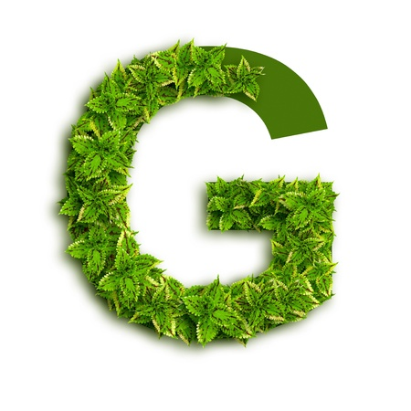 Letter G, alphabet of green leaves isolated on white background. Stock Photo