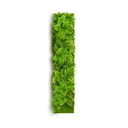 Letter I, alphabet of green leaves isolated on white background.