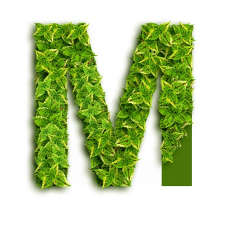 Letter M, alphabet of green leaves isolated on white background. photo