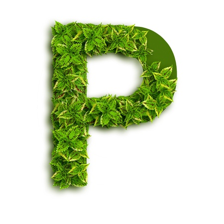 Letter P, alphabet of green leaves isolated on white background. photo