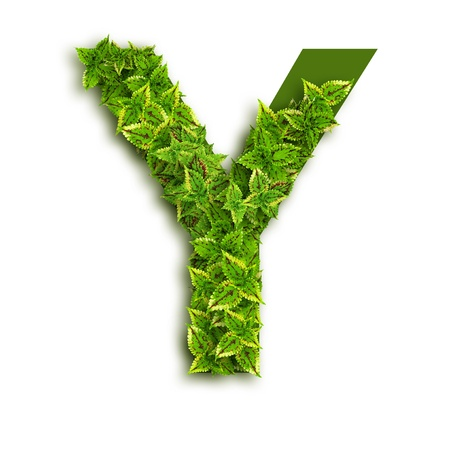 Letter Y, alphabet of green leaves isolated on white background. photo