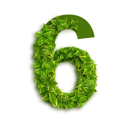 Number 6, alphabet of green leaves isolated on white background.