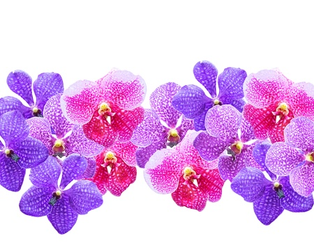 Vibrant purple tropical orchids flowers  isolated on white background. photo