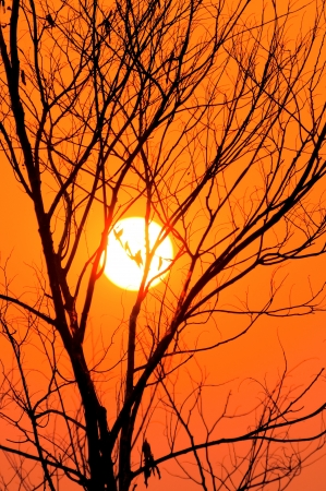 Silhouette of dead trees with a sunset background. photo