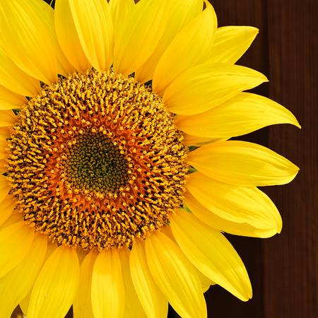 Sunflowers on wooden brown background. Stock Photo