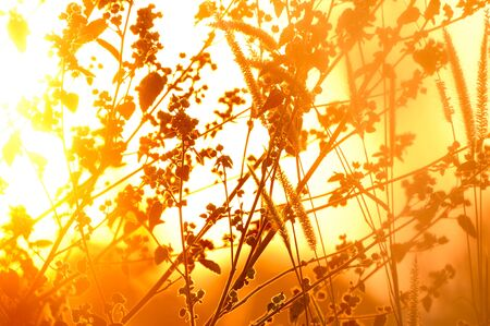 Grassland and sun in the morning. Stock Photo