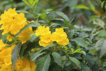 Yellow Flowers 写真素材