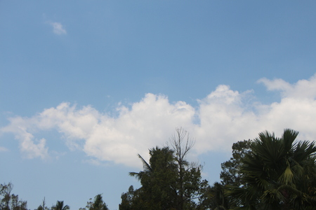 Sky and trees 写真素材