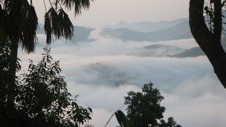 Mist Sea