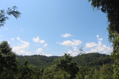 Cloud sky and tree