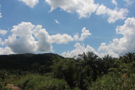 Cloud sky and tree panoramic
