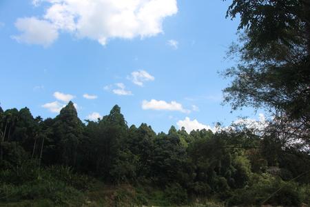 sky and tree 写真素材