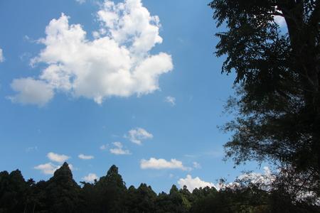 Sky and tree