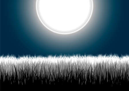 Vector illustration of detailed grass leaves on a gradient night moon sky Illustration