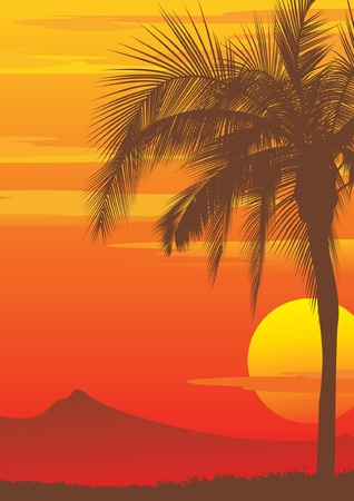 Palm tree at sunset, vector