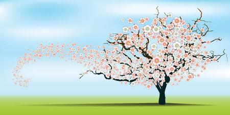 Spring wind rips cherry blossom tree