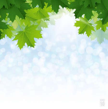Lush green maple leaves against the blue sky  Vector  Illustration