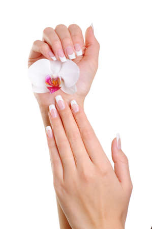french manicure: Beautiful elegant woman hand with french manicure hold the white flower