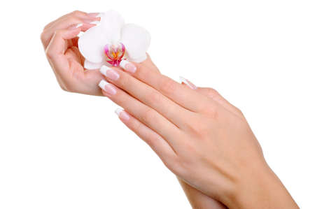 manicured: Beautiful well-groomed  female hand with elegance fingers and  french manicure hold the white flower Stock Photo