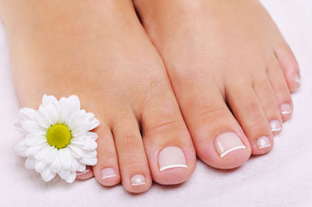human toe: Care of a female feet with the French pedicure and flower. White camomile Stock Photo