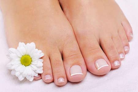 pedicure: Cura di una femmina piedi con la pedicure francese e il fiore. Camomilla bianco  Archivio Fotografico