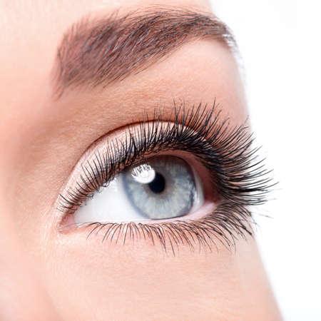 mascara: Beauty female eye with curl long false eyelashes - macro shot over white background