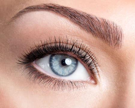 false eyelash: Beauty female blue eye with curl long false eyelashes - macro shot over white background