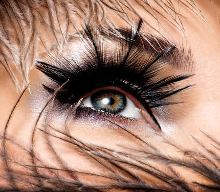 woman eye: CLoseup female eye with beautiful fashion makeup with long false eyelashe
