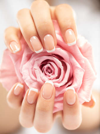 Beautiful womans nails with french manicure and rose. Beautiful female hands. Hand care. Woman cares for the nails on hands. Beauty treatment with skin of hand.   Womans hands close-up view.