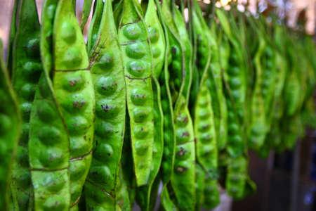 Sato, tropische plantaardige  Stockfoto