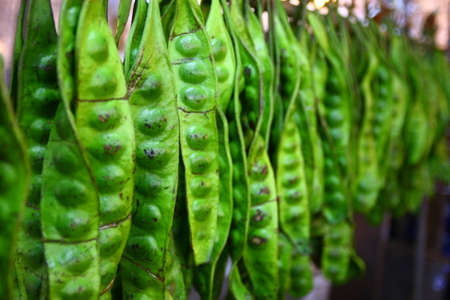 Sato, tropical vegetable  Stockfoto