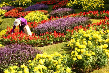 gardener among the flowers photo