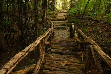 wooden beams: The way into the forest, Thailand