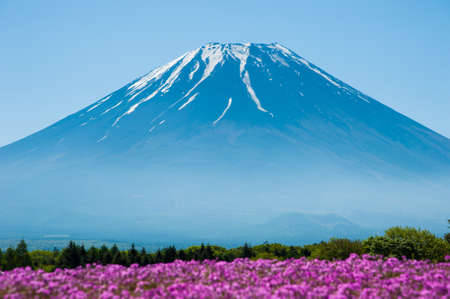fuji san: Beautiful landscape, Fuji San Mountain with fog and blurred field of Shibazakura flowers at Yamanashi, Japan