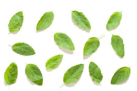 Flat layout isolated basil leaf are different on white background Stock Photo