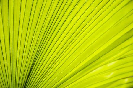 Texture lijn van groene bladeren palm