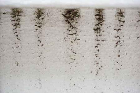 Water en regen schade vlek op witte muur