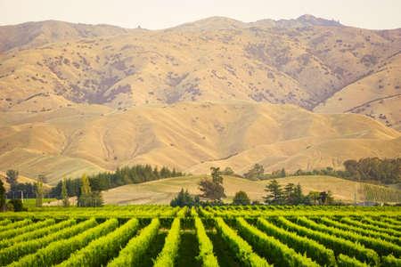 Rij van prachtige druiven werf voor zonsondergang met berg in Blenheim, Nieuw-Zeeland