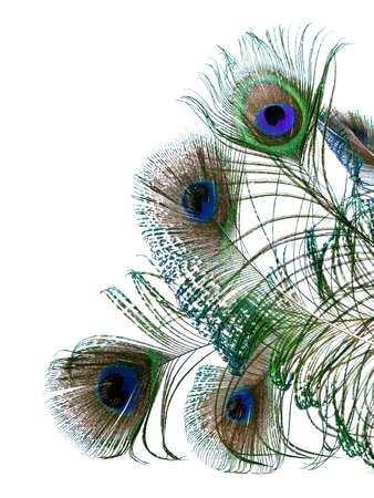 pavo real: plumas de pavo real aisladas sobre fondo blanco