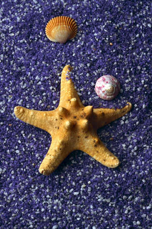 seashell and starfishes on lilac sand photo