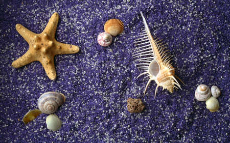 sea shell and starfishes on lilac sand photo