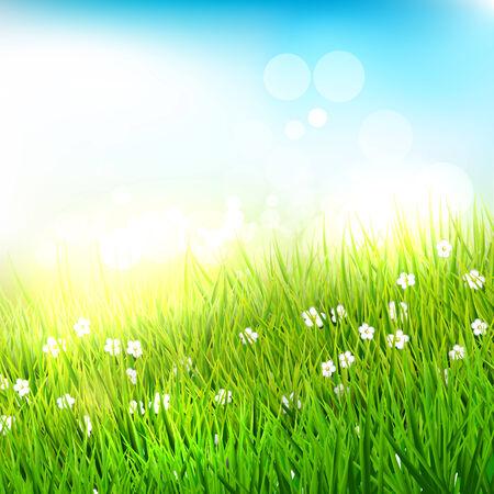 hoog gras: Lente weide met hoog gras - achtergrond