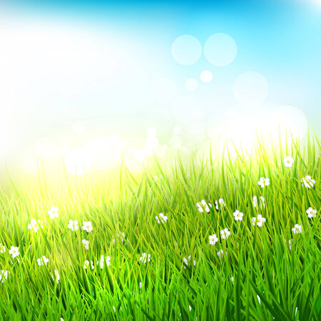tall grass: Spring meadow with tall grass - background