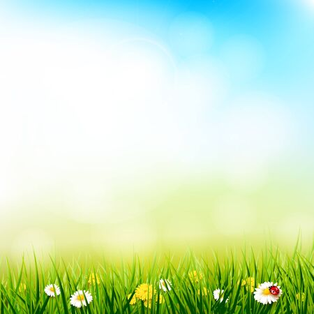 defocus: Spring background with flowers in the grass