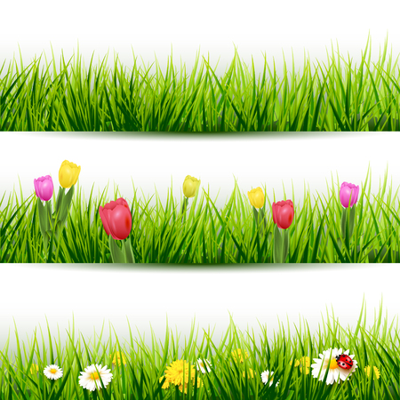 tulips in green grass: Set of three grass borders with flowers