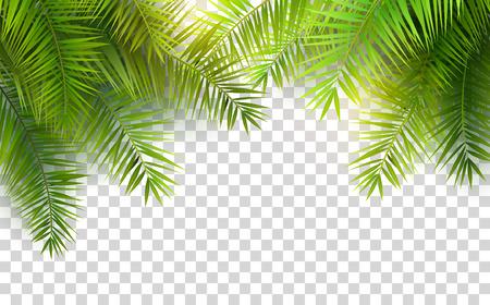 Letnie liście palmowe na przezroczystym tle