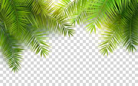 Summer palm leaves on transparent background