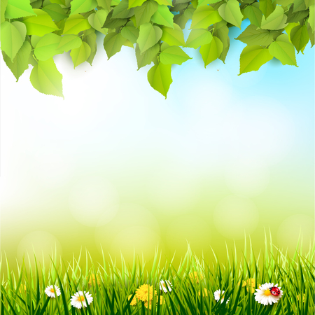 Spring background. Leaves and grass with flowers in front of a sunny meadow. Place for text Illusztráció