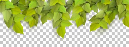 Spring leaves border on transparent background.